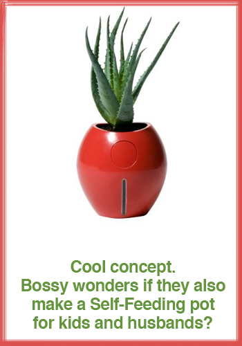 Grobal-Self-Watering-pot.jpg