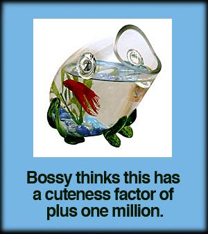 frog-fish-tank.jpg