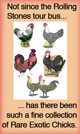 mcMurray-chicks.jpg