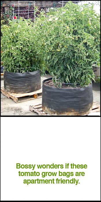 tomato-grow-bag.jpg