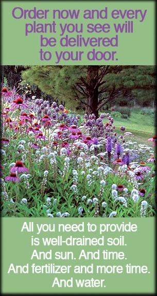 whiteflower-plants.jpg