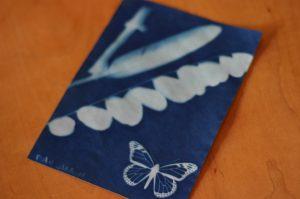 Sun print (butterfly)