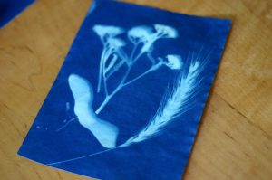 sun print art (flowers)