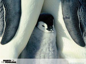 National Penguin Awareness Day