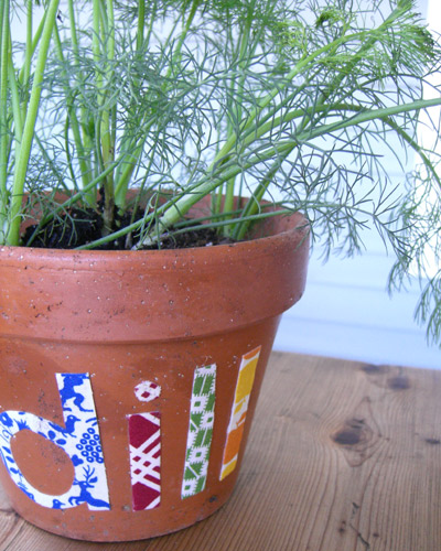 potted dill herbs