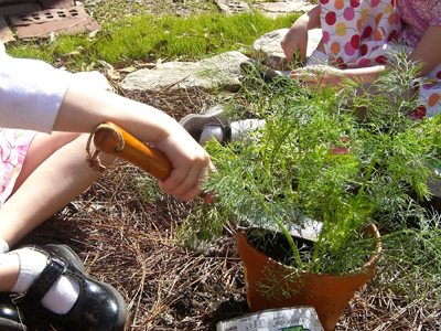 creating an herb garden with kids