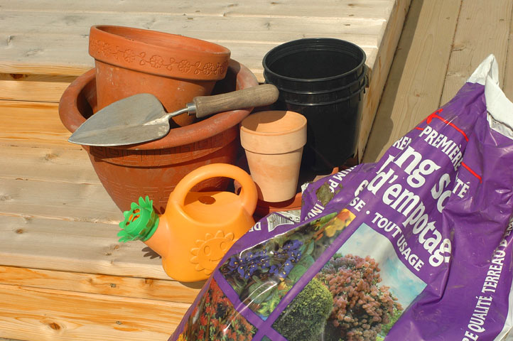 Gardening with Kids: Potted Flowers