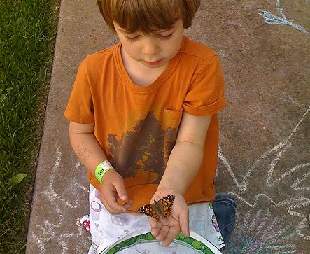 Lastweekend_butterflies.png