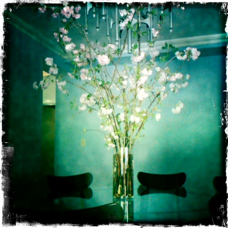 cherry_blossom_tree_home.jpg