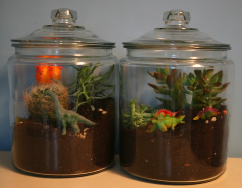 Make a Terrarium with your kids