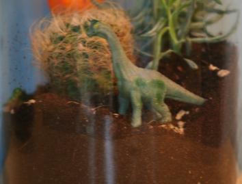 close up of a terrarium