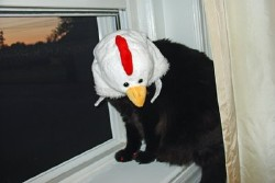 chickenheaded-cat.jpg