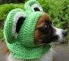 frogdoghat.jpg