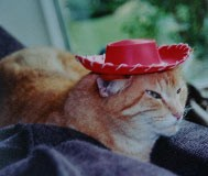 howdycat.jpg