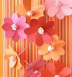 Martha Stewart Flowers