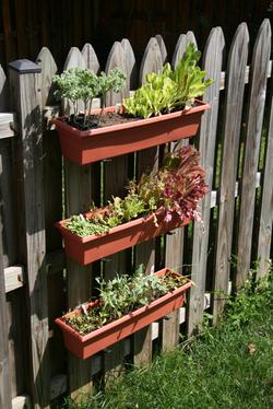container-garden-1.jpg