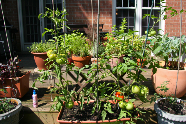 Urban suburban hippies alpha mom - Soil for container vegetable gardening ...