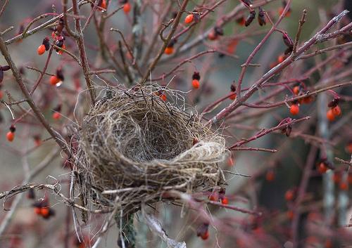 empty_nest_by_muffet.jpg