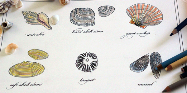 Sea Shell Printable!