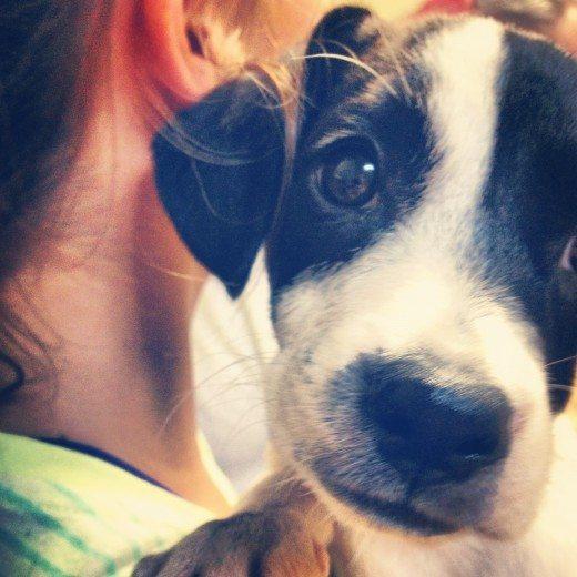 Should My Family Adopt a Second Dog? at Alphamom.com