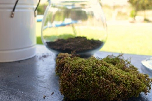 How to make a terrarium tutorial: adding moss