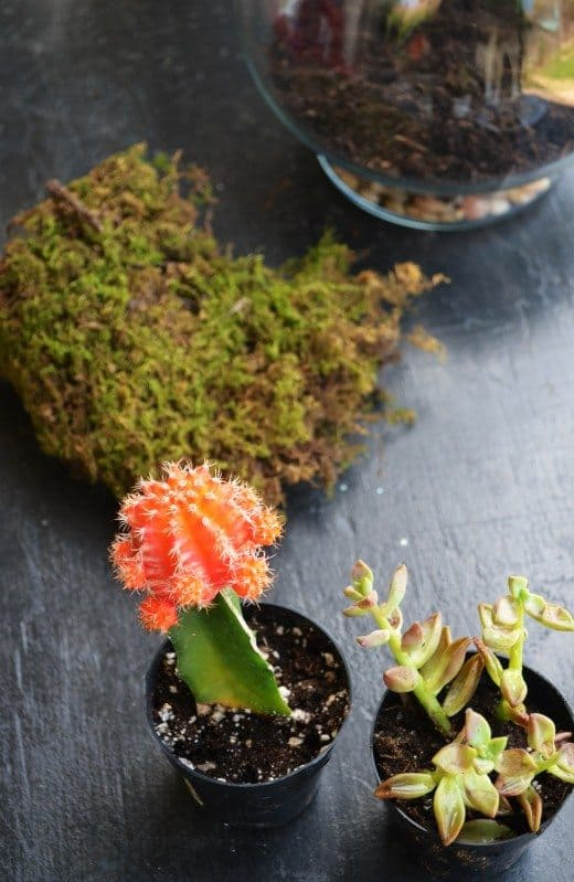 Choosing plants for a terrarium