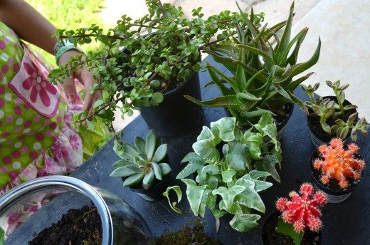 Plants for making a terrarium