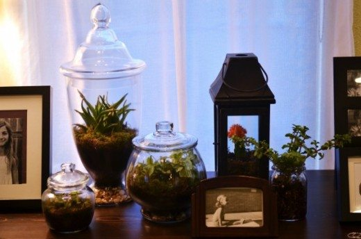 Terrariums displayed on a table