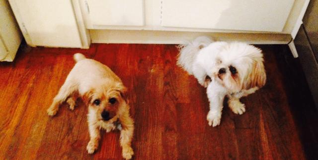 moms-dogs