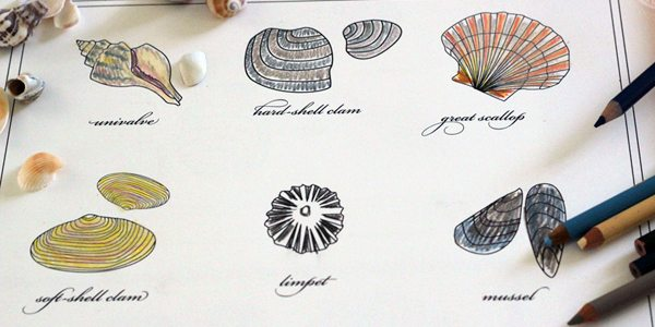 Sea Shell Coloring Printable by Brenda Ponnay for Alphamom.com