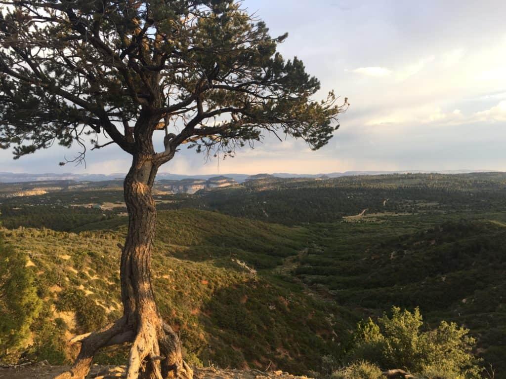 Beautiful view of Zion Ponderosa