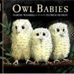 Owl Babies Book: Three baby owls — Sarah, Percy and Bill — wake to find that their mother has left the nest to find food, and they worry that she's never coming back. This beautifully illustrated story is one of our favorites.