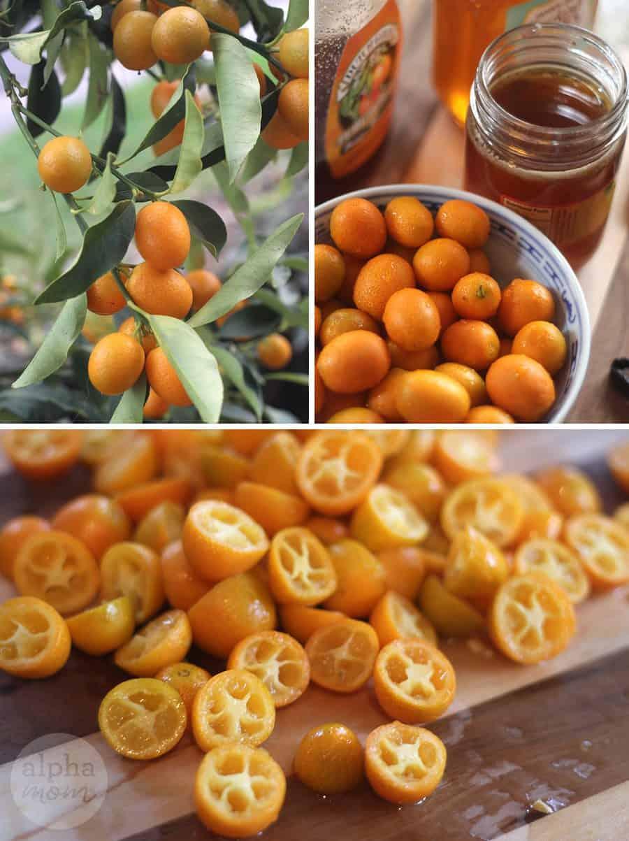 Candied Kumquat Citrus Cake Recipe (how to candy kumquats) by Brenda Ponnay for Alphamom.com