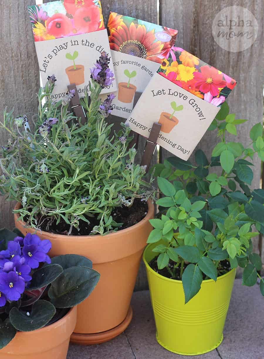 Plants with gardening seed packets on sticks