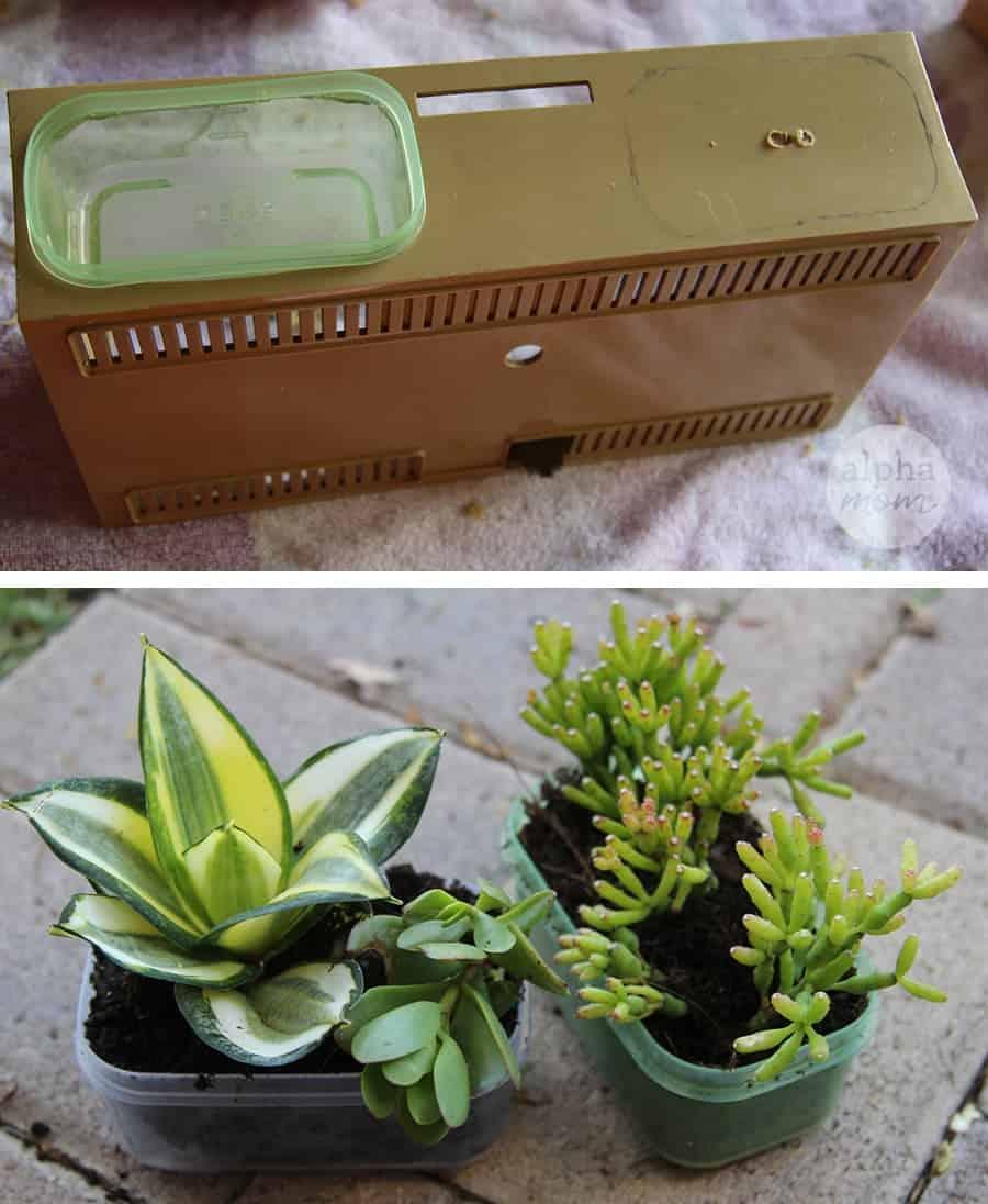 succulents for vintage clock radio planter craft