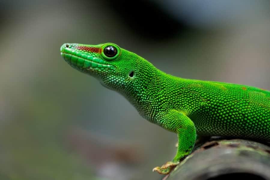 Managing your Child's 'Lizard Brain'