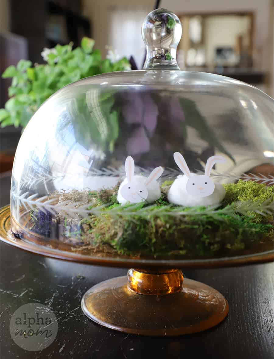 two Cotton Ball Bunnies in a covered Terrarium with moss