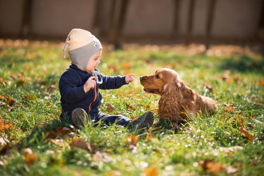toddler boy sitting on the grass with a dog and pointing at it